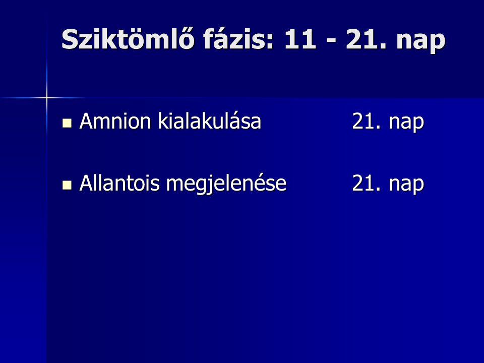 Sziktömlő fázis: 11 - 21. nap Amnion kialakulása21. nap Amnion kialakulása21. nap Allantois megjelenése21. nap Allantois megjelenése21. nap