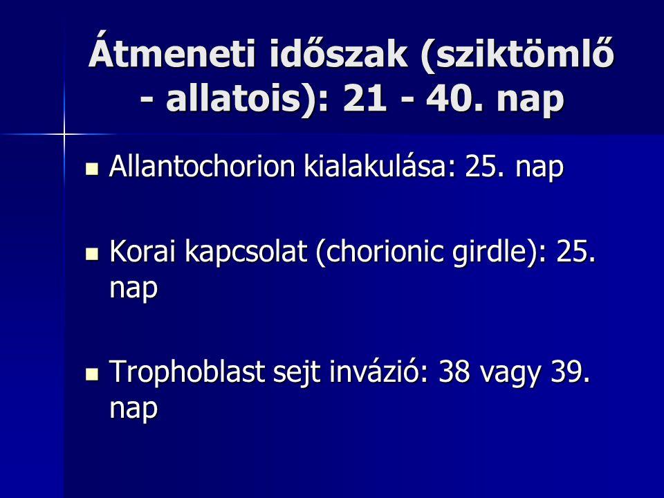 Átmeneti időszak (sziktömlő - allatois): 21 - 40. nap Allantochorion kialakulása: 25. nap Allantochorion kialakulása: 25. nap Korai kapcsolat (chorion