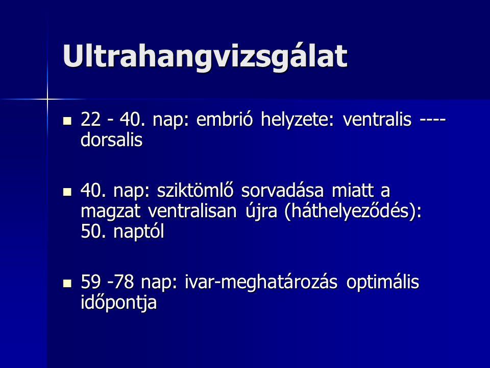 Ultrahangvizsgálat 22 - 40. nap: embrió helyzete: ventralis ---- dorsalis 22 - 40. nap: embrió helyzete: ventralis ---- dorsalis 40. nap: sziktömlő so