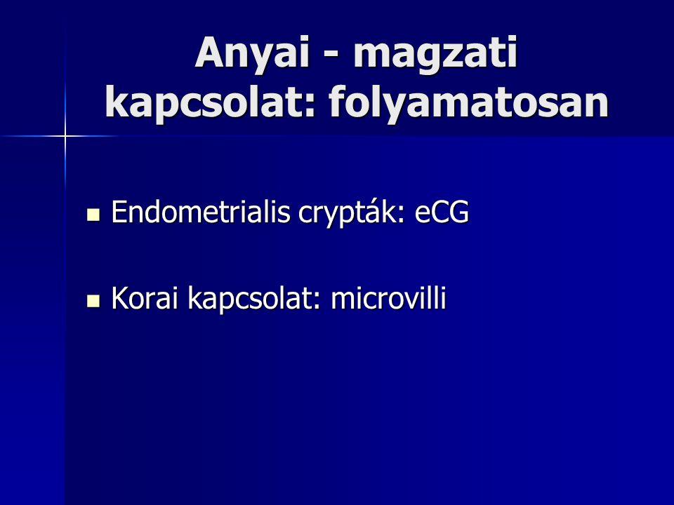 Anyai - magzati kapcsolat: folyamatosan Endometrialis crypták: eCG Endometrialis crypták: eCG Korai kapcsolat: microvilli Korai kapcsolat: microvilli