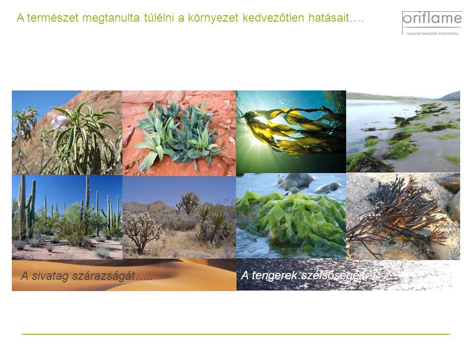 A természet megtanulta túlélni a környezet kedvezőtlen hatásait…. A sivatag szárazságát…............ A tengerek szélsőségeit...