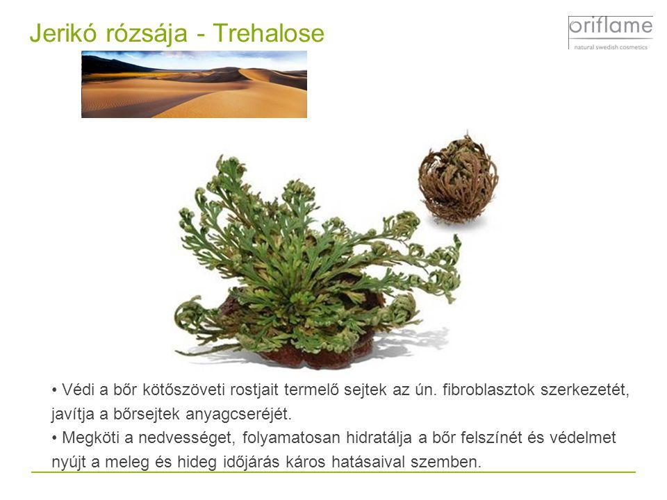 Jerikó rózsája - Trehalose Védi a bőr kötőszöveti rostjait termelő sejtek az ún.