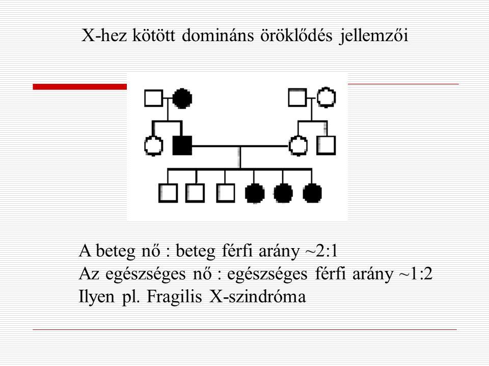 X-hez kötött domináns öröklődés jellemzői A beteg nő : beteg férfi arány ~2:1 Az egészséges nő : egészséges férfi arány ~1:2 Ilyen pl. Fragilis X-szin