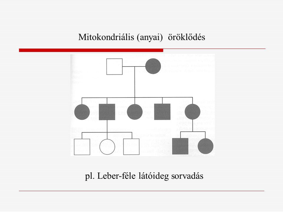 Mitokondriális (anyai) öröklődés pl. Leber-féle látóideg sorvadás