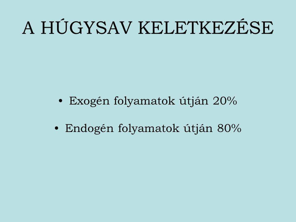 A HÚGYSAV KELETKEZÉSE Exogén folyamatok útján 20% Endogén folyamatok útján 80%
