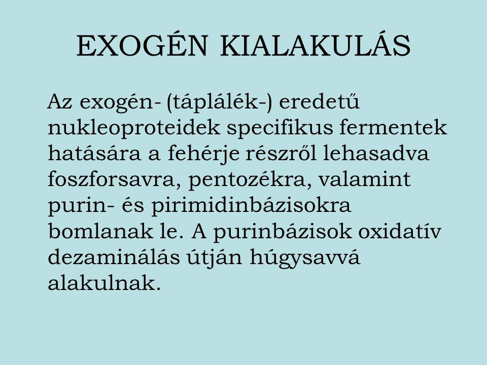 EXOGÉN KIALAKULÁS Az exogén - (táplálék-) eredetű nukleoproteidek specifikus fermentek hatására a fehérje részről lehasadva foszforsavra, pentozékra,