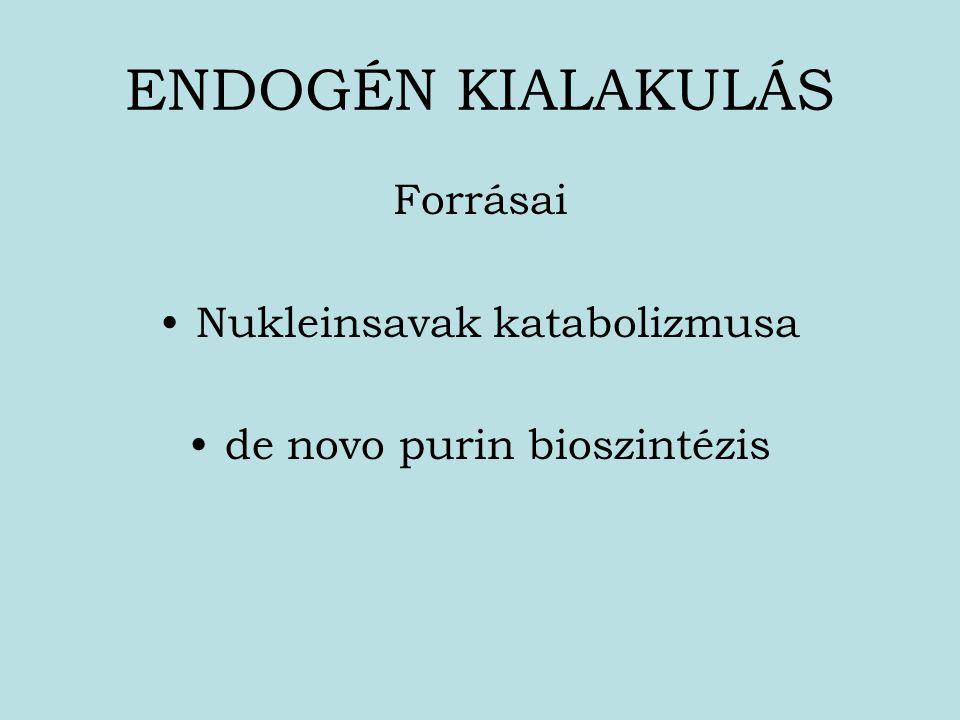 ENDOGÉN KIALAKULÁS Forrásai Nukleinsavak katabolizmusa de novo purin bioszintézis