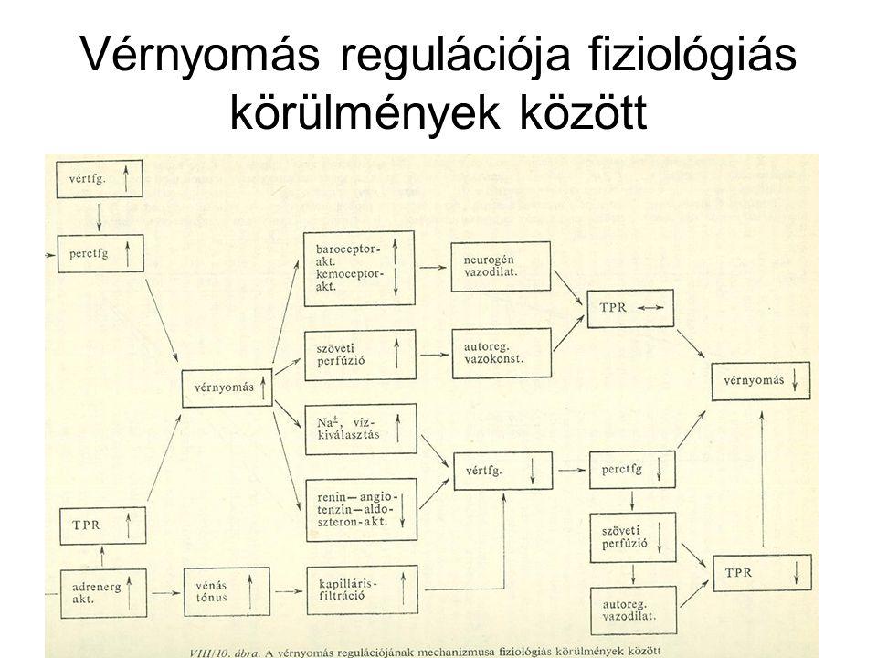 Vérnyomás regulációja fiziológiás körülmények között