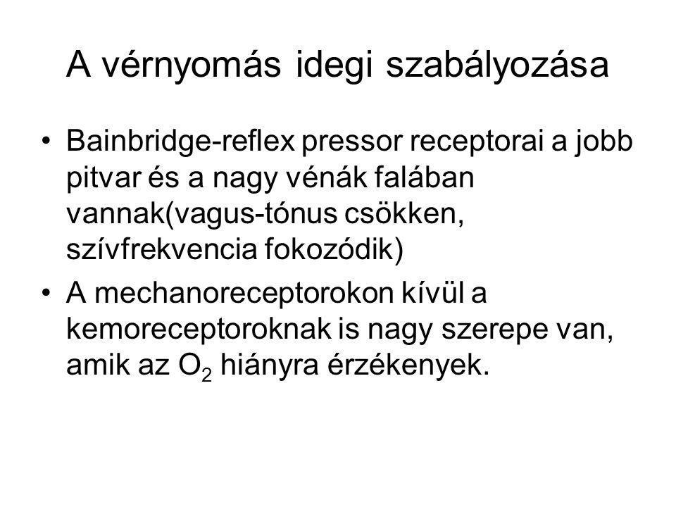 A vérnyomás idegi szabályozása Bainbridge-reflex pressor receptorai a jobb pitvar és a nagy vénák falában vannak(vagus-tónus csökken, szívfrekvencia f