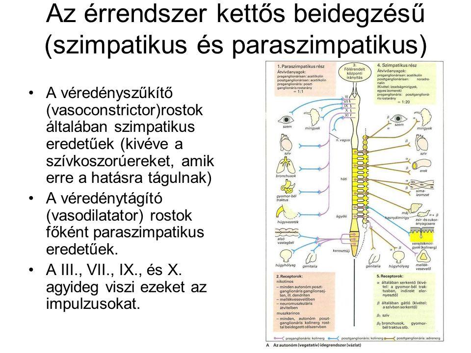 Az érrendszer kettős beidegzésű (szimpatikus és paraszimpatikus) A véredényszűkítő (vasoconstrictor)rostok általában szimpatikus eredetűek (kivéve a s