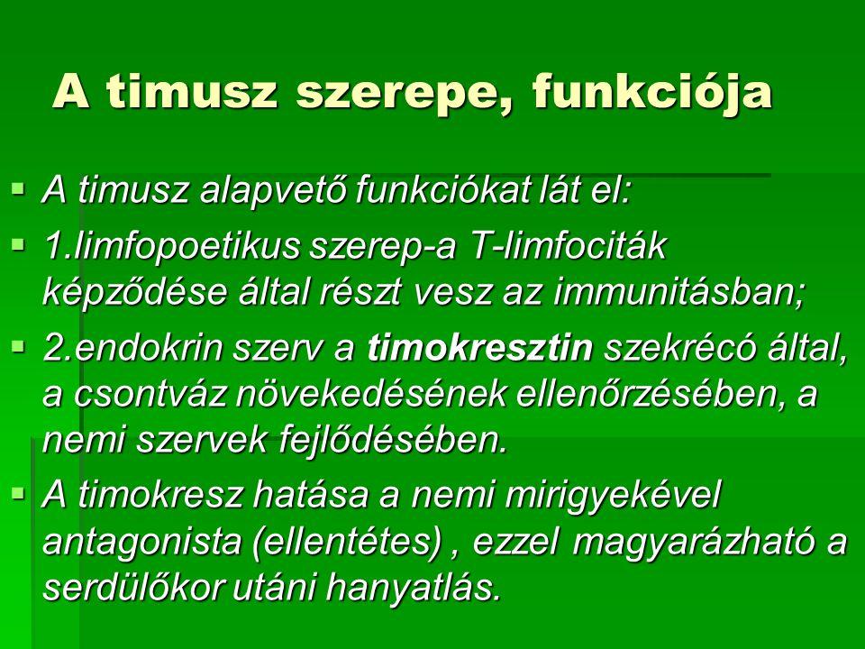 A timusz szerepe, funkciója  A timusz alapvető funkciókat lát el:  1.limfopoetikus szerep-a T-limfociták képződése által részt vesz az immunitásban;