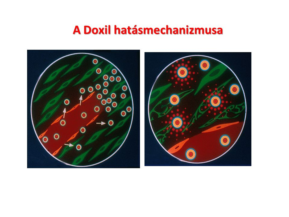 A Doxil hatásmechanizmusa