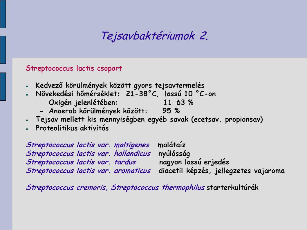 Tejsavbaktériumok 2. Streptococcus lactis csoport Kedvező körülmények között gyors tejsavtermelés Növekedési hőmérséklet: 21-38°C, lassú 10 °C-on  Ox