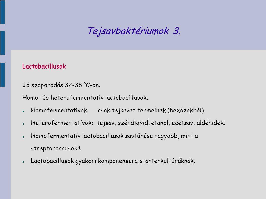 Tejsavbaktériumok 3. Lactobacillusok Jó szaporodás 32-38 °C-on. Homo- és heterofermentatív lactobacillusok. Homofermentatívok: csak tejsavat termelnek