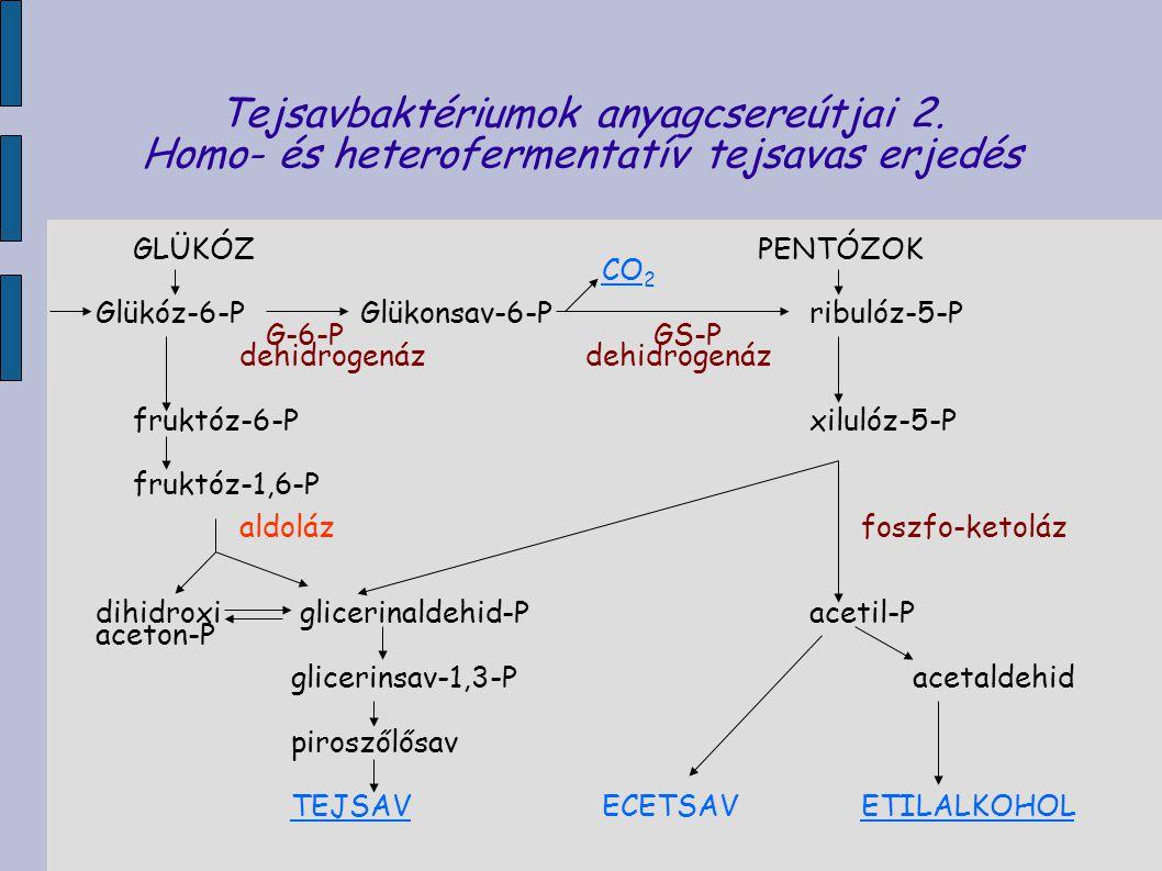 Tejsavbaktériumok anyagcsereútjai 2. Homo- és heterofermentatív tejsavas erjedés GLÜKÓZPENTÓZOK CO 2 Glükóz-6-P Glükonsav-6-Pribulóz-5-P G-6-PGS-P deh