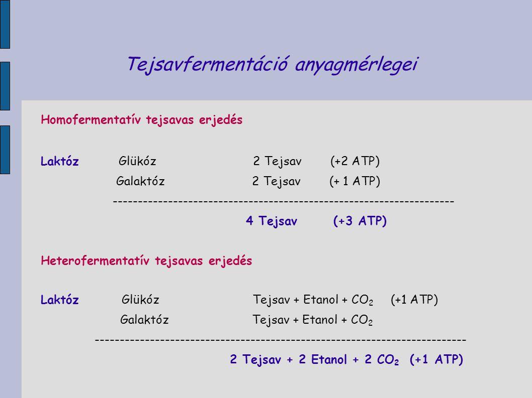 Tejsavfermentáció anyagmérlegei Homofermentatív tejsavas erjedés Laktóz Glükóz 2 Tejsav (+2 ATP) Galaktóz 2 Tejsav (+ 1 ATP) -------------------------