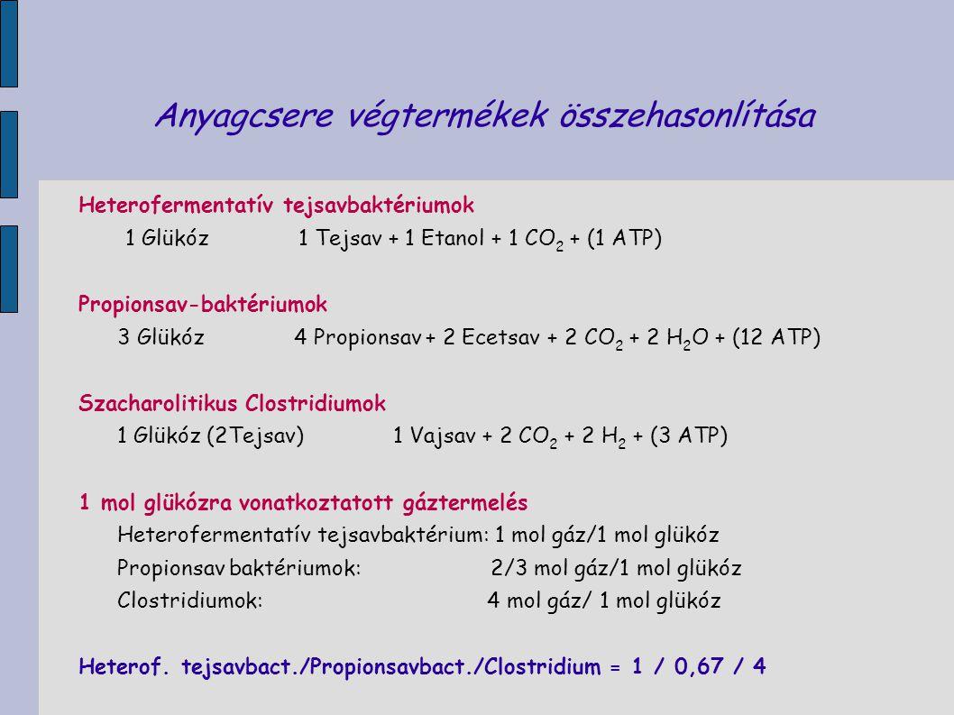 Anyagcsere végtermékek összehasonlítása Heterofermentatív tejsavbaktériumok 1 Glükóz 1 Tejsav + 1 Etanol + 1 CO 2 + (1 ATP) Propionsav-baktériumok 3 G