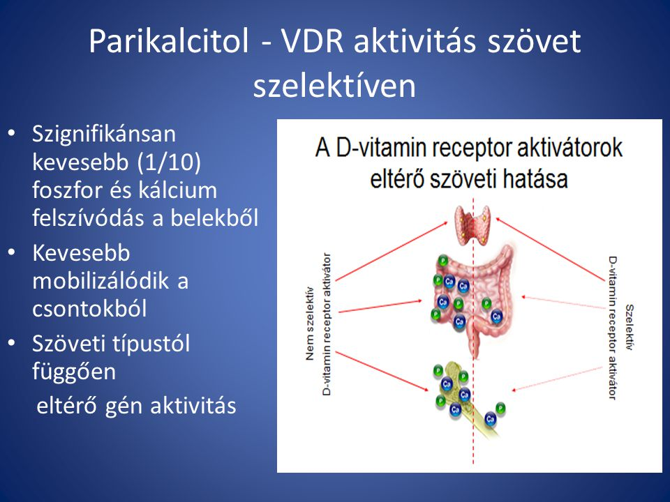 Parikalcitol - VDR aktivitás szövet szelektíven Szignifikánsan kevesebb (1/10) foszfor és kálcium felszívódás a belekből Kevesebb mobilizálódik a csontokból Szöveti típustól függően eltérő gén aktivitás