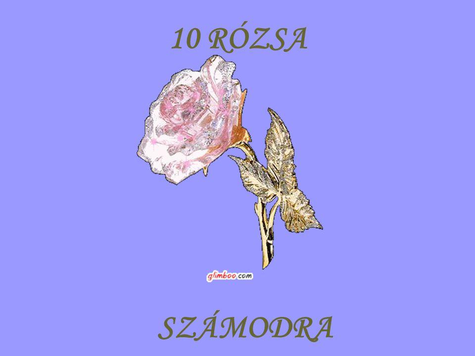 10 RÓZSA SZÁMODRA