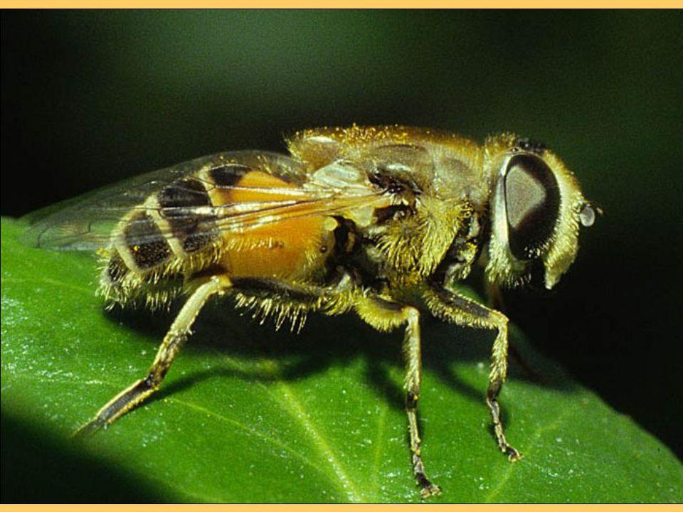 Nagyon fontos lenne, hogy az étrendünkben a fehér cukrot felváltsa a méz.