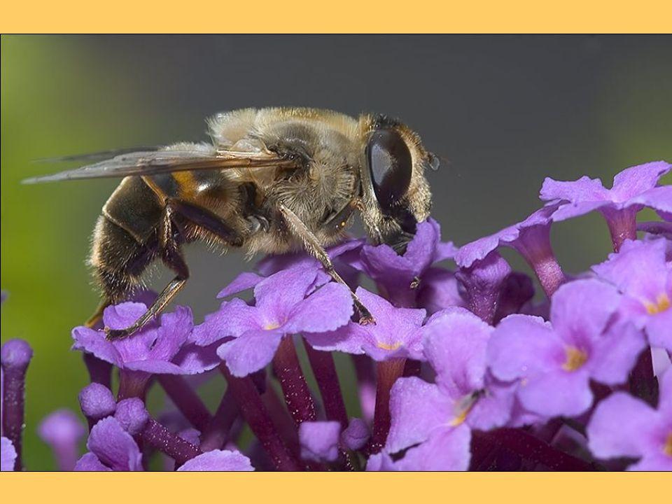 A méhpempő B1, B2, B3, B5, B12 vitamint és vasat, kalciumot, rezet, szilíciumot és mangánt tartalmaz.