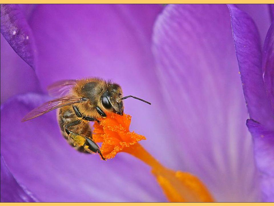 A méhészeti termékek széleskörű és szelíd gyógyhatásuk miatt hatékony segítséget nyújtanak az egészség megőrzésében és a betegségek gyógyításában.
