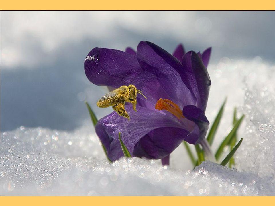 A méz bizonyítottan hetven betegség esetén segít, ezek közül a legfontosabbak: gyomor- és, nyombélhurut, szívbetegségek, májbetegségek, epebetegségek, felső légúti betegségek: hurutos betegségek, megfázás, nátha; egyes mirigybetegségek (általános alulműködésnél, mivel a méznek serkentő hatása van), nőgyógyászati betegségek, idegrendszeri problémák (a B vitamin tartalma miatt), nyugtalanság, idegesség, pszichés problémák, elmezavar, pszichés eredetű fogyás.