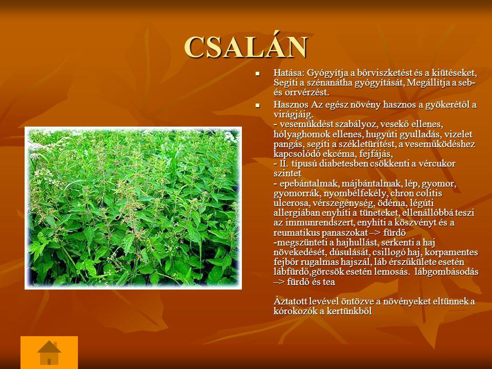 CSALÁN Hatása: Gyógyítja a bőrviszketést és a kiütéseket, Segíti a szénanátha gyógyítását, Megállítja a seb- és orrvérzést. Hatása: Gyógyítja a bőrvis