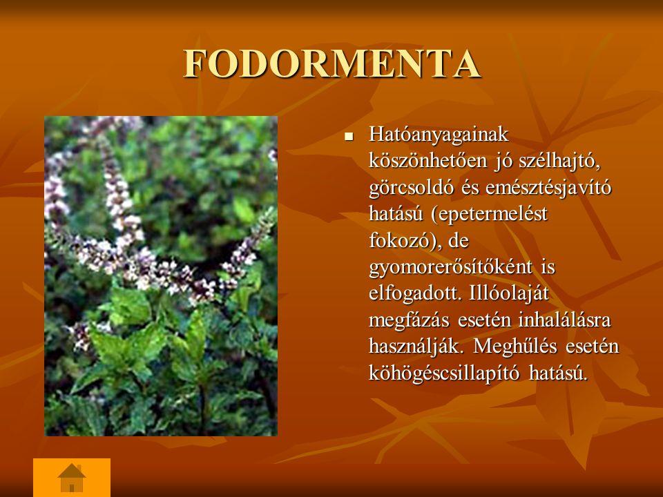 FODORMENTA Hatóanyagainak köszönhetően jó szélhajtó, görcsoldó és emésztésjavító hatású (epetermelést fokozó), de gyomorerősítőként is elfogadott. Ill