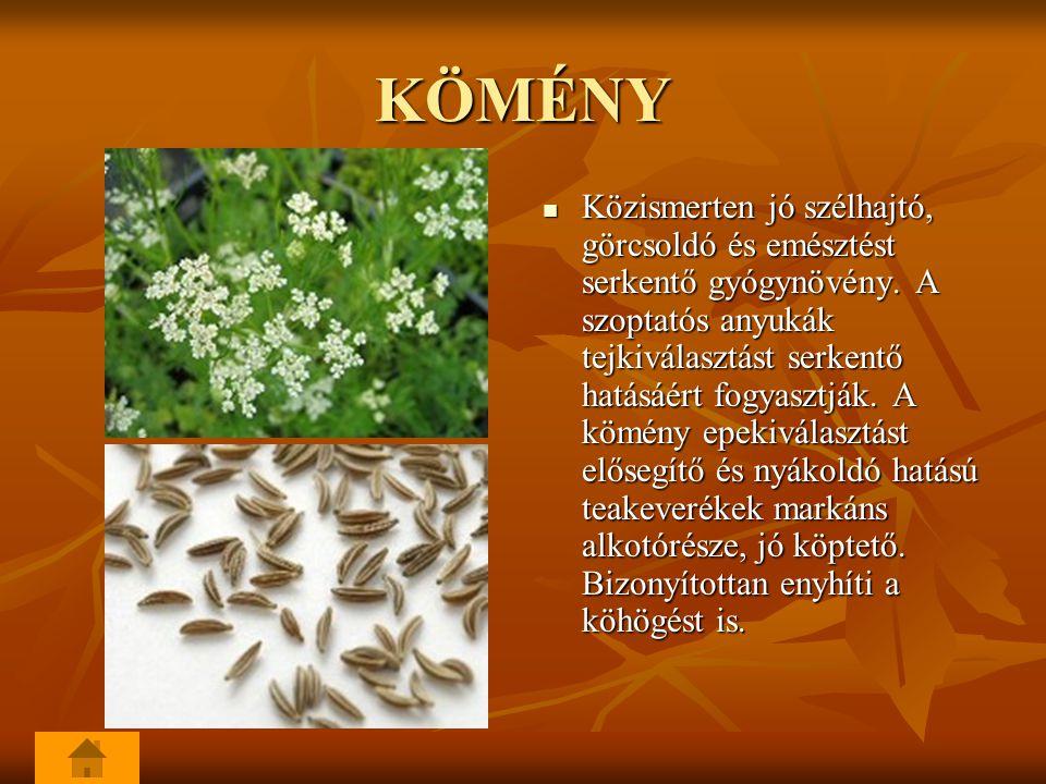 KÖMÉNY Közismerten jó szélhajtó, görcsoldó és emésztést serkentő gyógynövény.