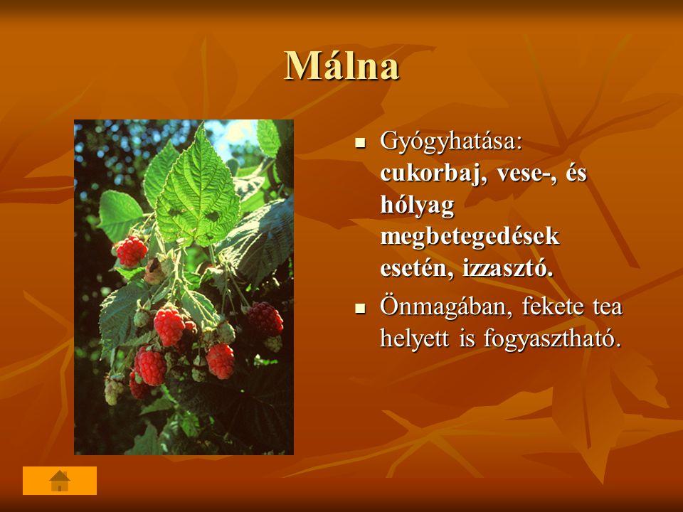 Málna Gyógyhatása: cukorbaj, vese-, és hólyag megbetegedések esetén, izzasztó.
