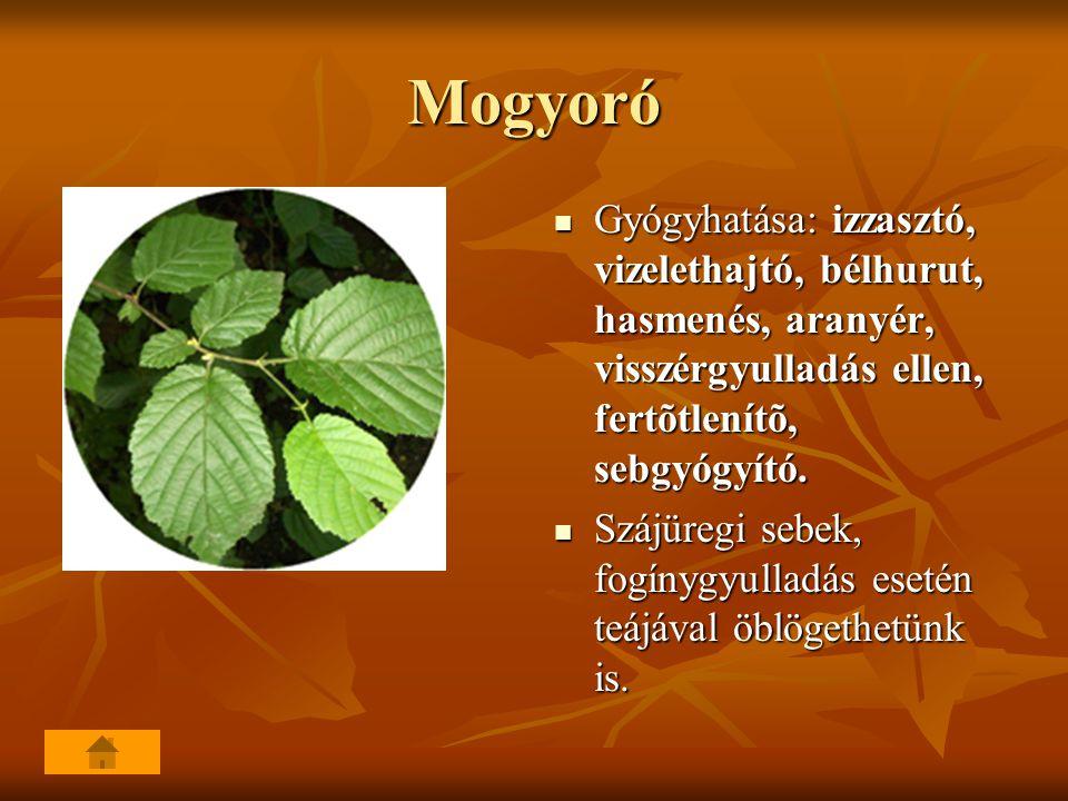 Mogyoró Gyógyhatása: izzasztó, vizelethajtó, bélhurut, hasmenés, aranyér, visszérgyulladás ellen, fertõtlenítõ, sebgyógyító. Gyógyhatása: izzasztó, vi