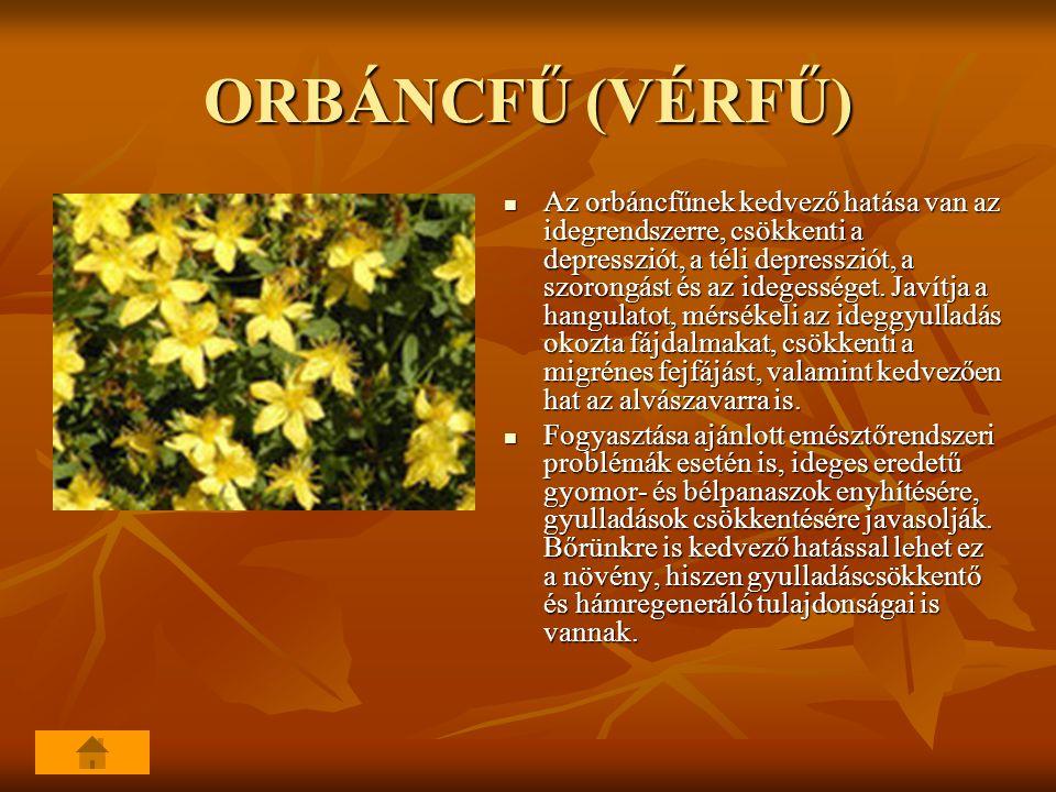 ORBÁNCFŰ (VÉRFŰ) Az orbáncfűnek kedvező hatása van az idegrendszerre, csökkenti a depressziót, a téli depressziót, a szorongást és az idegességet.