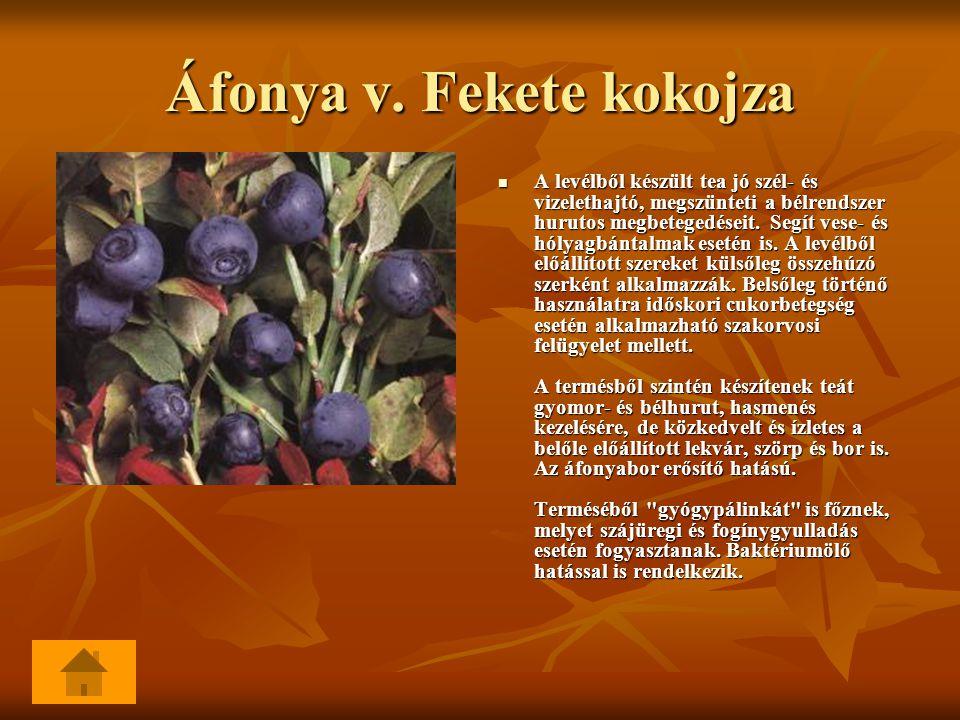 Áfonya v. Fekete kokojza A levélből készült tea jó szél- és vizelethajtó, megszünteti a bélrendszer hurutos megbetegedéseit. Segít vese- és hólyagbánt