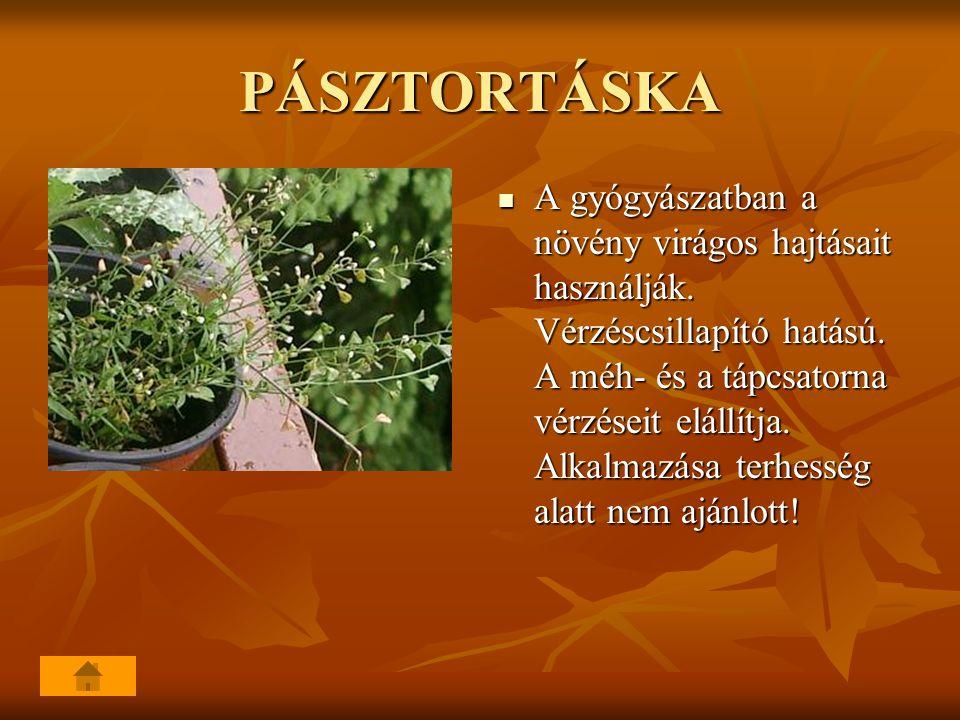 PÁSZTORTÁSKA A gyógyászatban a növény virágos hajtásait használják. Vérzéscsillapító hatású. A méh- és a tápcsatorna vérzéseit elállítja. Alkalmazása