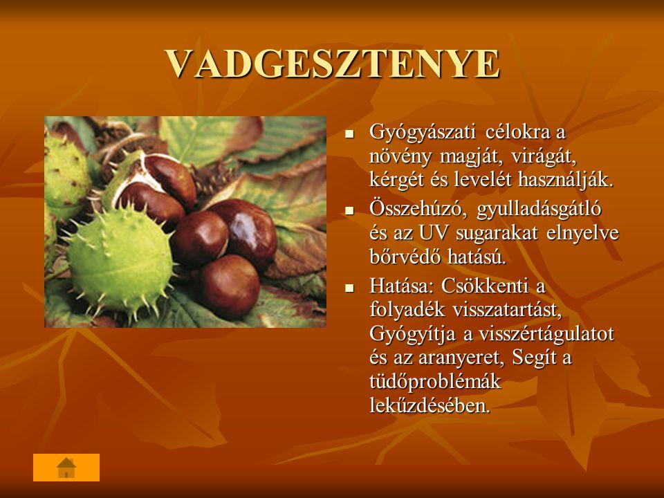 VADGESZTENYE Gyógyászati célokra a növény magját, virágát, kérgét és levelét használják.