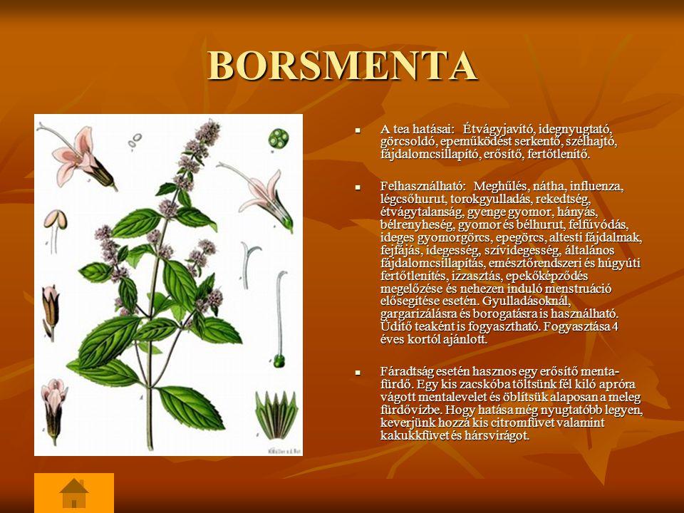 BORSMENTA A tea hatásai: Étvágyjavító, idegnyugtató, görcsoldó, epeműködést serkentő, szélhajtó, fájdalomcsillapító, erősítő, fertőtlenítő.