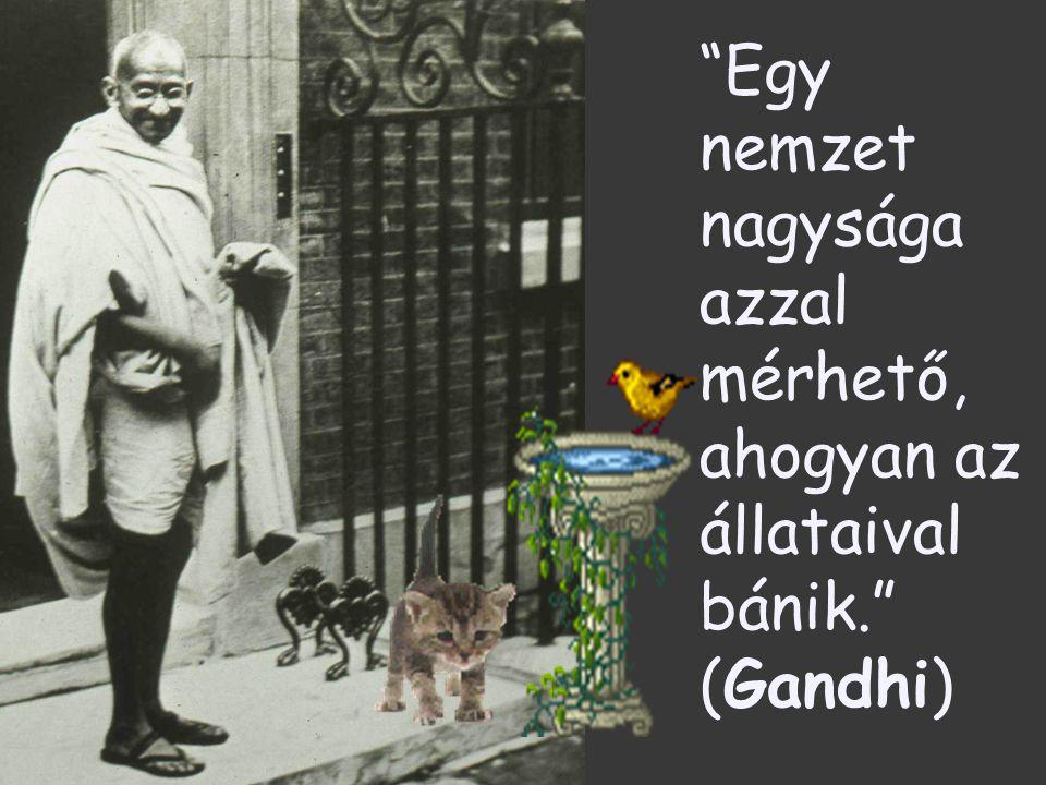 Egy nemzet nagysága azzal mérhető, ahogyan az állataival bánik. (Gandhi)