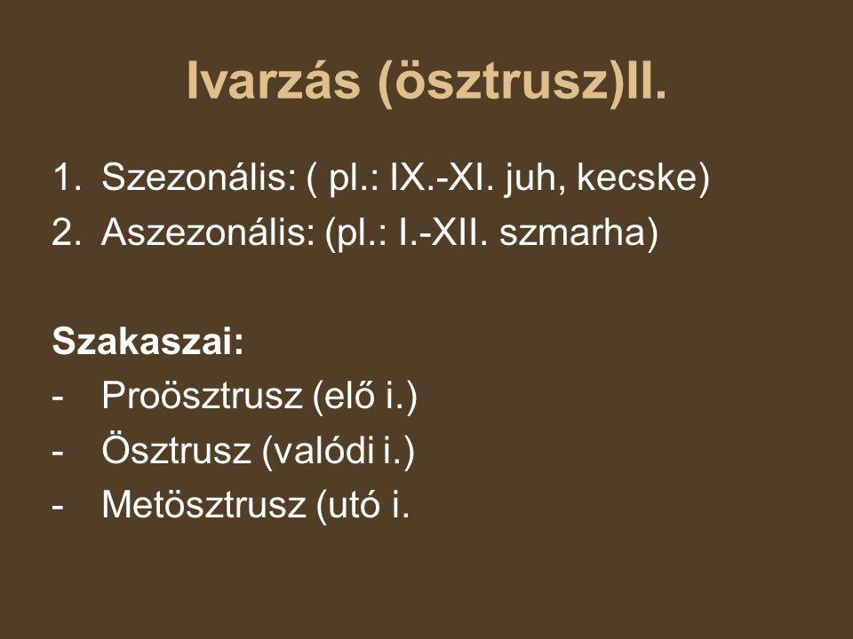Ivarzás (ösztrusz)II. 1.Szezonális: ( pl.: IX.-XI. juh, kecske) 2.Aszezonális: (pl.: I.-XII. szmarha) Szakaszai: -Proösztrusz (elő i.) -Ösztrusz (való