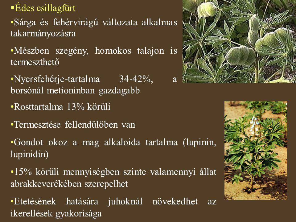  Édes csillagfürt Sárga és fehérvirágú változata alkalmas takarmányozásra Mészben szegény, homokos talajon is termeszthető Nyersfehérje-tartalma 34-4
