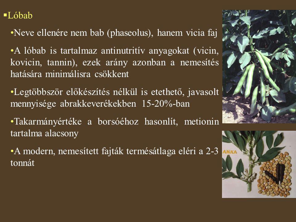  Lóbab Neve ellenére nem bab (phaseolus), hanem vicia faj A lóbab is tartalmaz antinutritív anyagokat (vicin, kovicin, tannin), ezek arány azonban a