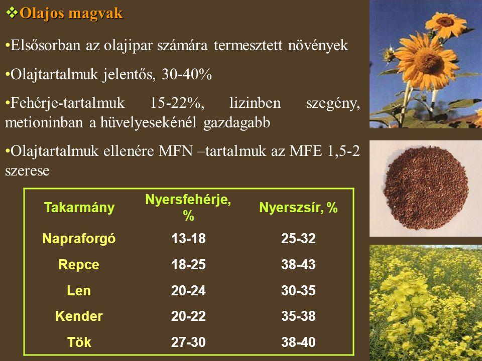  Olajos magvak Elsősorban az olajipar számára termesztett növények Olajtartalmuk jelentős, 30-40% Fehérje-tartalmuk 15-22%, lizinben szegény, metioni