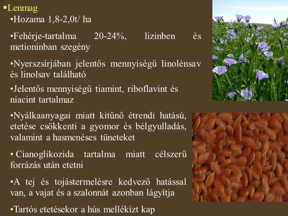  Lenmag Hozama 1,8-2,0t/ ha Fehérje-tartalma 20-24%, lizinben és metioninban szegény Nyerszsírjában jelentős mennyiségű linolénsav és linolsav találh