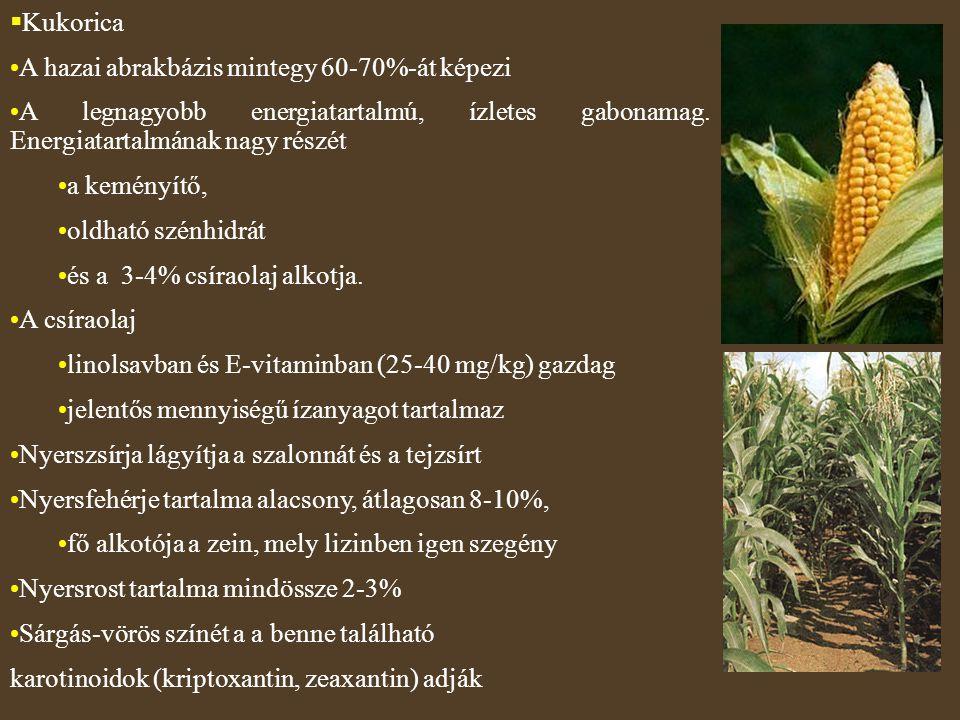  Kukorica A hazai abrakbázis mintegy 60-70%-át képezi A legnagyobb energiatartalmú, ízletes gabonamag. Energiatartalmának nagy részét a keményítő, ol