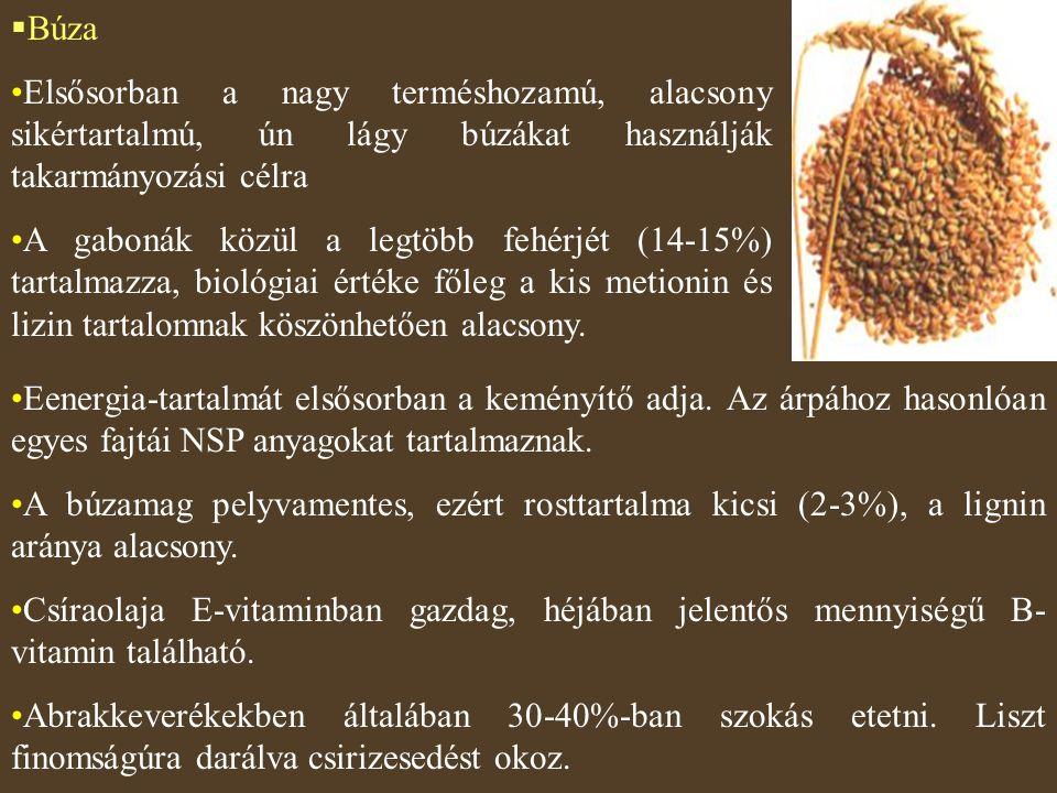  Búza Elsősorban a nagy terméshozamú, alacsony sikértartalmú, ún lágy búzákat használják takarmányozási célra A gabonák közül a legtöbb fehérjét (14-