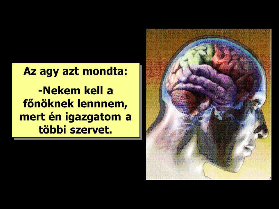 Az agy azt mondta: -Nekem kell a főnöknek lennnem, mert én igazgatom a többi szervet. Az agy azt mondta: -Nekem kell a főnöknek lennnem, mert én igazg