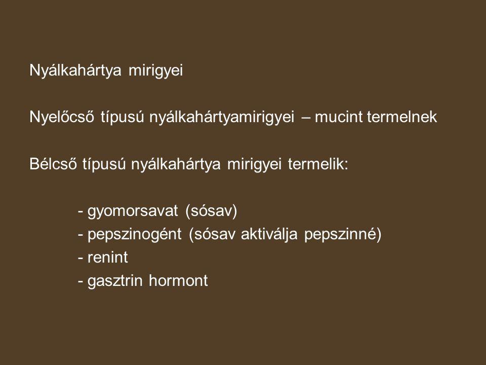 Nyálkahártya mirigyei Nyelőcső típusú nyálkahártyamirigyei – mucint termelnek Bélcső típusú nyálkahártya mirigyei termelik: - gyomorsavat (sósav) - pe