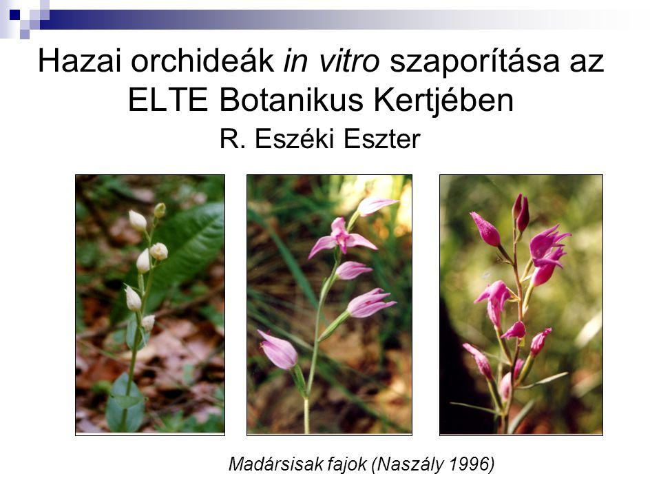 Hazai orchideák in vitro szaporítása az ELTE Botanikus Kertjében R. Eszéki Eszter Madársisak fajok (Naszály 1996)