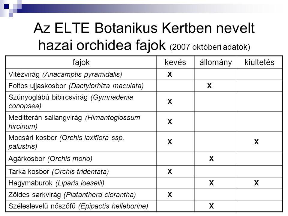 Az ELTE Botanikus Kertben nevelt hazai orchidea fajok (2007 októberi adatok) fajokkevésállománykiültetés Vitézvirág (Anacamptis pyramidalis) X Foltos