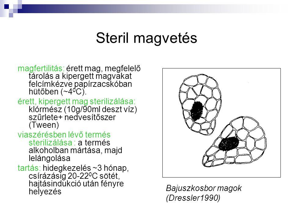 Steril magvetés magfertilitás: érett mag, megfelelő tárolás a kipergett magvakat felcímkézve papírzacskóban hütőben (~4 0 C). érett, kipergett mag ste